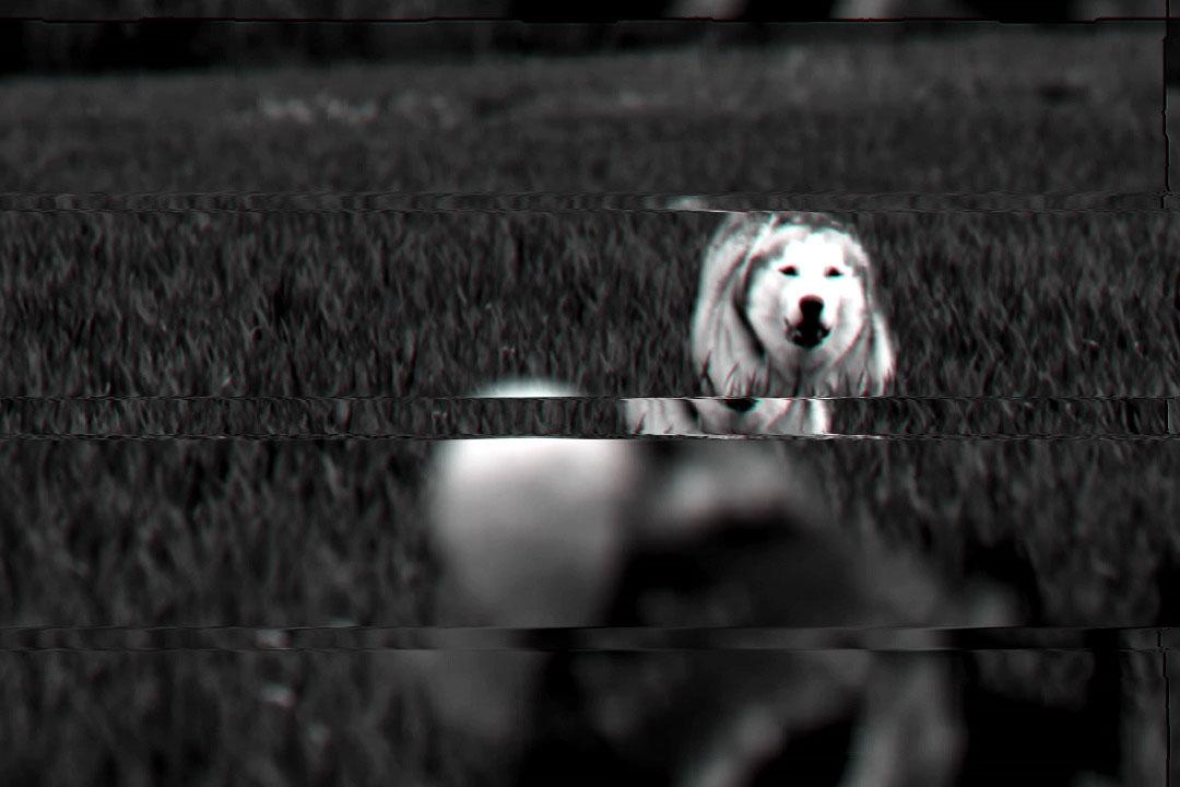 Rone-Beast,-Pt.-2.00_01_04_01.Image-fixe010
